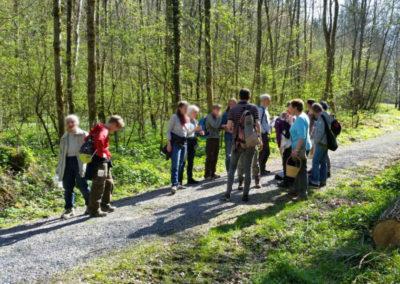 Natur Pur Wildkräuterkurse Frühlingspflanzen Bestimmungsmerkmale