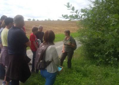 Natur Pur Wildkräuterkurse Pflanzen am Wegesrand Bestimmungsmerkmale