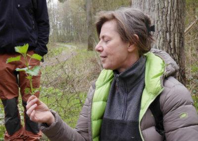 Natur Pur Wildkräuterkurse Spannende Pflanzengeschichten